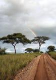 Acacia trees with rainbow Royalty Free Stock Photography