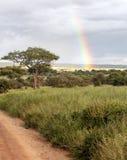 Acacia trees with rainbow Stock Photography