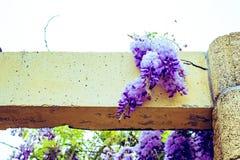 acacia photographie stock
