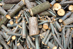 Acacia wooden logs Stock Images