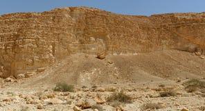 Acaciabomen en struiken bij de bodem van de rotsachtige muur in de woestijn stock fotografie