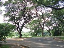 Acaciabomen in OMHOOGGAANDE Diliman Stock Fotografie