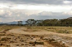 Acacias Stock Images