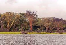 Acacias of kenya. Acacias with lake on the African Savannah of Kenya on a cloudy day royalty free stock images