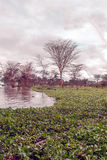 Acacias in lake. Acacias with lake on the African Savannah of Kenya on a cloudy day. It´s a vertical picture royalty free stock photo