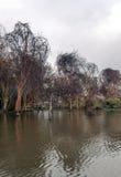 Acacias in lake Stock Photos