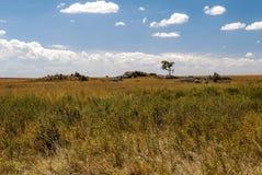 Acacias in the serengeti Royalty Free Stock Photos