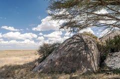Acacias in the serengeti Stock Image