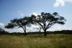 Acacias Zimbabwe/Botswana Border - Kazungula. Typical acacia and other mixed woodland scenery and grasslands on the border of north western Zimbabwe and Botswana Stock Photography