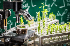 Academic laboratory testing of pesticides on plants Royalty Free Stock Image