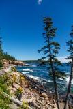 Acadia-Küste mit Blumen Lizenzfreie Stockbilder