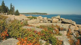Acadia-Küstenlinie Stockbild