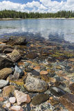 Acadia-Küstenlinie - Bäume im Hintergrund Lizenzfreie Stockfotos