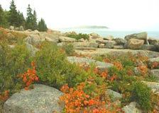 Acadia-Küstenlinie im Herbst Stockfotografie