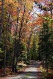 Acadia Maine del camino del otoño Fotografía de archivo libre de regalías