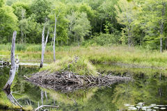 Acadia National Park - Beaver Lodge royalty free stock images
