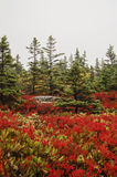 Acadia National Park Fall colors. Colorful foliage on Great Head Trail  on foggy autumn day in Acadia National park on Bar Harbor, Maine. On Mount Desert Island Stock Images