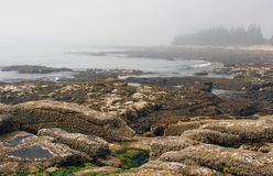 Acadia National Park, Maine. Low tide at Acadia National Park, Maine Royalty Free Stock Images