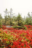 Acadia-Nationalpark-Fallfarben Stockfotografie