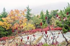 Acadia-Nationalpark-Fallfarben Lizenzfreie Stockfotografie
