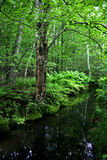 Acadia-Nationalpark, Maine Stockfotografie