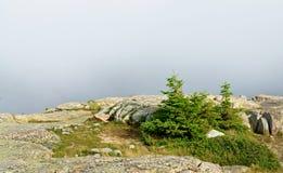 Acadia-Nationalpark nebel Stockbild