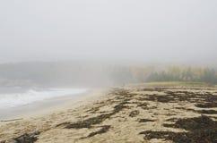 Acadia-Nationalpark-Sand-Strand Stockfotografie