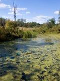 Acadia-Nationalpark-Wasser Stockfotos