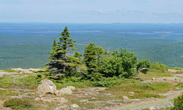 Acadia park narodowy Las Zdjęcie Royalty Free