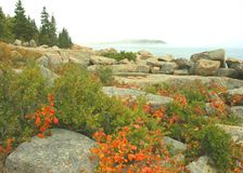 Acadia Seacoast In Autumn Stock Photography