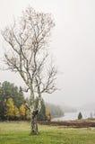 Acadianationalpark Jordan Pond i höst Royaltyfri Bild