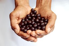 Acai Royalty Free Stock Photography