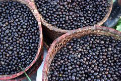 Acai Royalty Free Stock Image