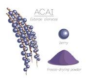 Acai Stock Image