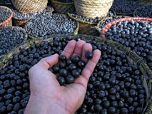 Acai in der Hand Stockfoto