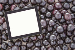 Acai-Frucht - Euterpe oleracea Lizenzfreies Stockbild
