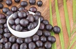 Acai-Frucht - Euterpe oleracea Lizenzfreie Stockfotos