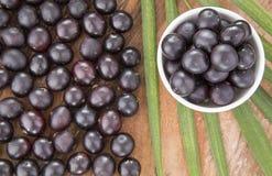 Acai-Frucht - Euterpe oleracea Lizenzfreies Stockfoto