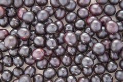 Acai fruit - Euterpe oleracea Stock Photo