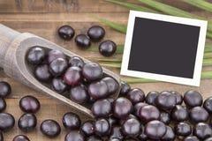 Acai fruit - Euterpe oleracea Royalty Free Stock Photos