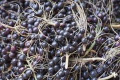Acai fruit - Euterpe oleracea Stock Photos