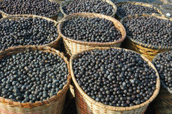 Acai Fruit Harvest and Market. Acai, the small superfruit from the brazilian amazon, which is very rich in naturally nutrients and antioxidants Stock Photo