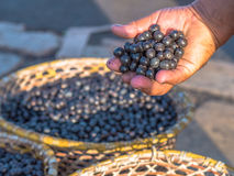 Acai in hand Royalty Free Stock Photos