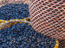 Free Acai In Baskets Stock Photography - 44546002