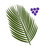 Acai palm leaves and acai berries Royalty Free Stock Image