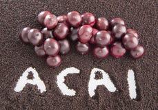 Acai powder - Euterpe oleracea Stock Images