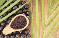 Acai-Pulver und Früchte - Euterpe oleracea Lizenzfreies Stockbild