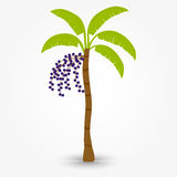 Acai tree Stock Photo