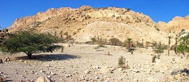 Acaica-Wüste Lizenzfreies Stockbild