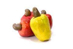 Acajoubaum-Frucht Lizenzfreies Stockbild